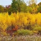 Autumn 2006, Minnesota Style