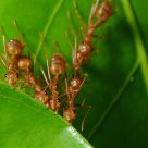 The Ant Power
