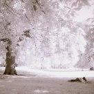 Lover's beneath the trees