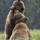 This is why its called a Bear Hug