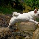You jump, I jump