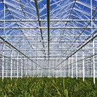 Greenhouse One