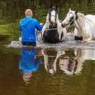 Washing the horses