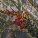 Ocotillo Abstract