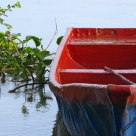 Anchored Boat and Water Hyacinths