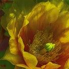 Cactus Bloom Zoom