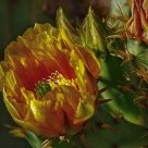 Cactus Bloom Detail