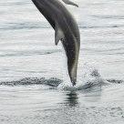Dolphin Dance