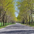 Country Road in Spring