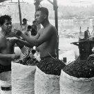 Mussel Packing Fishermen