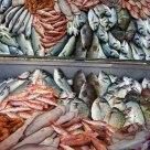 Foça balıkçılarından