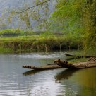 the bamboo raft on the water