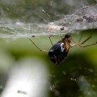 Mondo ragno