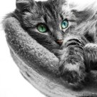 Selective Color Cat