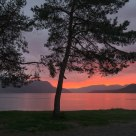 Golden sunset below pines on the beach. The village of Sandane - Norway