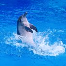 Dolphin: Backstroke