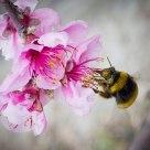 Flors i abella
