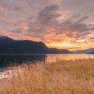 Golden fields by the fjord Gloppefjorden - Nordfjord