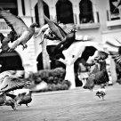 piccione di venice
