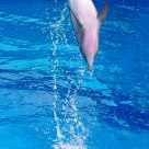 Dolphin: Bungee Jump 2