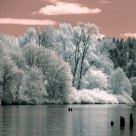 Willamette River IR