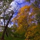 Autumn étude