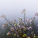 Foggy Flowers