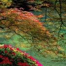 Pondside Tranquility