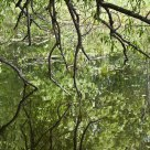 Reflections - Tree Branches over Water