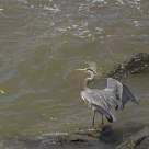 Heron and a leaf