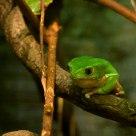 Tree Frog #4