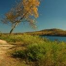 Autumn View #1