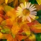 Summer Flower Montage