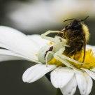 Bee Under Attack!