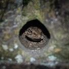Peek a Lizard