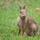 Roger Rabbit..