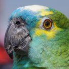 Parrot portrait