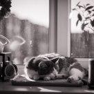 Sleeping on the sun