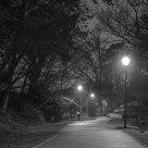 Night Walk at the Park