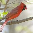 'Cardinal Rule'