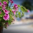 flowers gutter