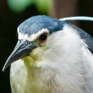 Close-up bird