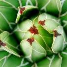 Geometric and plant