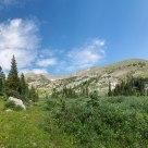 Arapahoe Trail Meadow