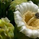 Bee Resting