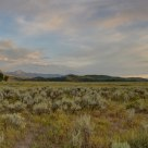 Teton Grassland