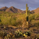 McDowell Sonoran Preserve - first look