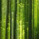 Matrix in forest