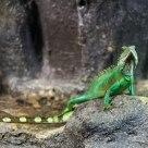 Green skin II