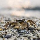 a cute crab